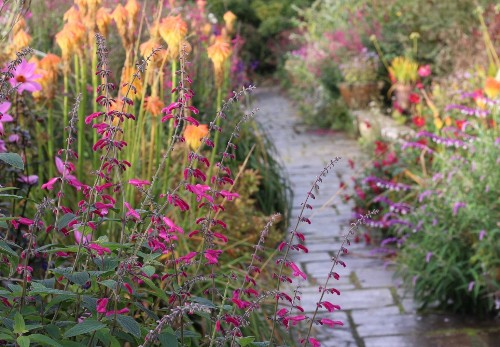 Salvias: Late-Season Saviors in the Garden