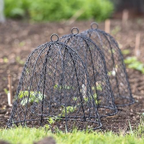 Garden Hacks: 10 Ideas for Wire Cloches