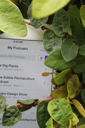 Tune In: 8 Best Garden Podcasts to Listen to Now