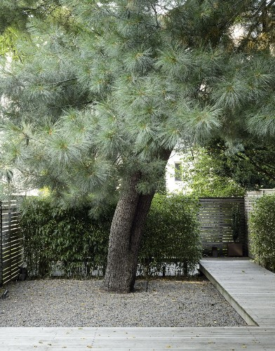 Privacy Landscaping: How to Use Plants in a City Garden