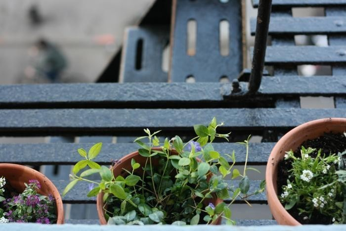 10 Things Nobody Tells You About Fire Escape Gardens - Gardenista