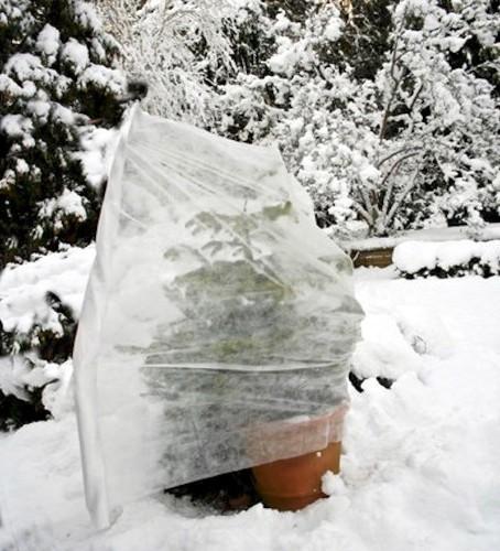 Garden Hacks: 10 Genius Ideas to Keep Plants Warm in Winter