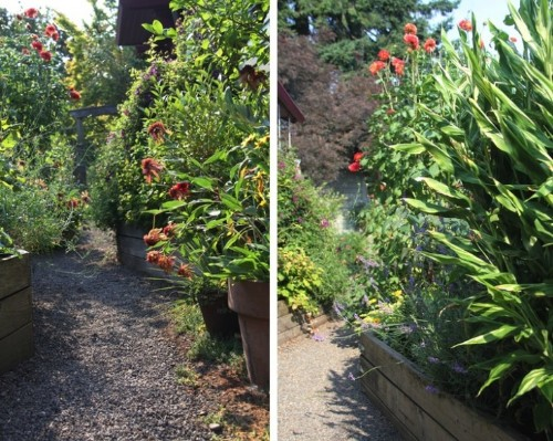 Designer Visit with Darcy Daniels: Simple Landscaping Ideas for a Side Yard