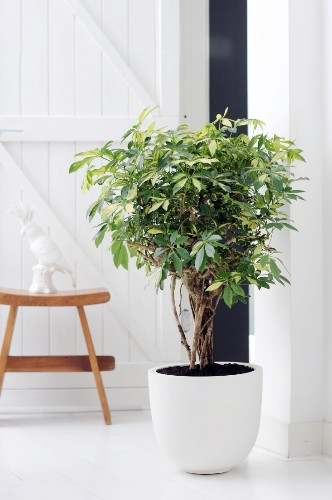 You Pinned It, We ID It: A Stylish Collection of Houseplants