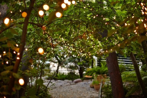 Garden Visit: Starry Nights and String Lights in Northern California