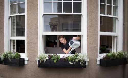 DIY Window Boxes: Build It Yourself for a Perfect Fit