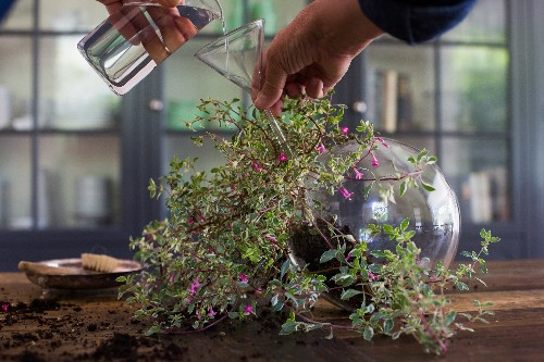 Plant Doctor: How to Save a Dying Houseplant