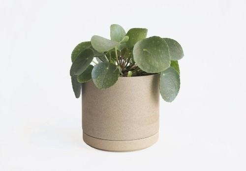Object of Desire: Elegant Ceramic Planters from Hasami Porcelain