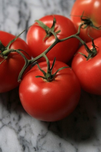 An Edible Winter Tomato: Does It Exist?