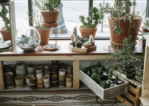 Houseplants: How to Decode the Info on Plant ID Tags