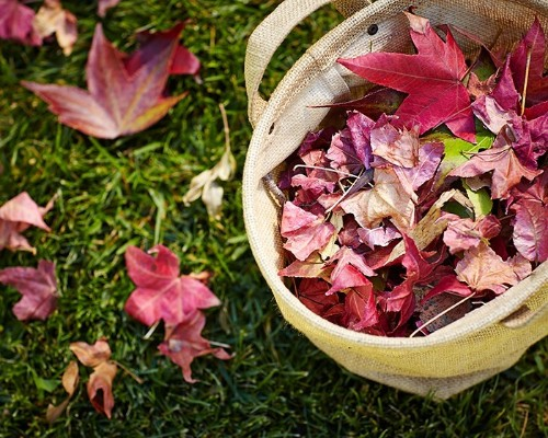 Gardening 101: How to Use Fallen Leaves