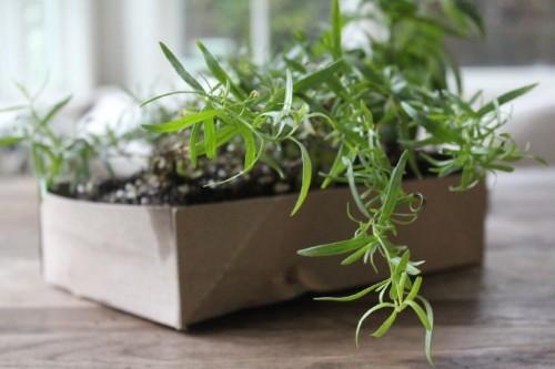 Gardening 101: Tarragon