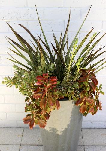 Gardening 101: New Zealand Flax