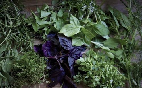 Gardening 101: Basil