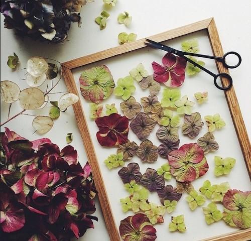 DIY Pressed Flowers: No Fuss Art Frames from Copenhagen