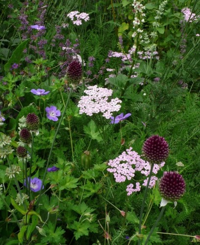 Alliums: Just As Good As Tulips But Better