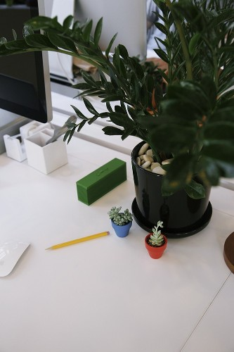 Ask the Expert: 10 Tips for Office Plants, from The Sill