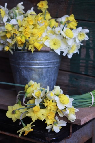 Field to Vase: A Friend to Local Flower Farms