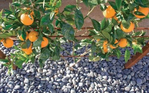 Best Edible Garden Winner: BaDesign
