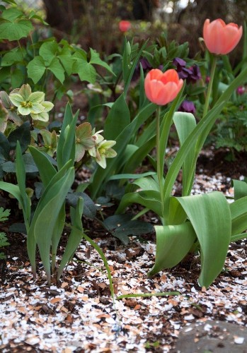 Gardening 101: How to Use Eggshells in the Garden