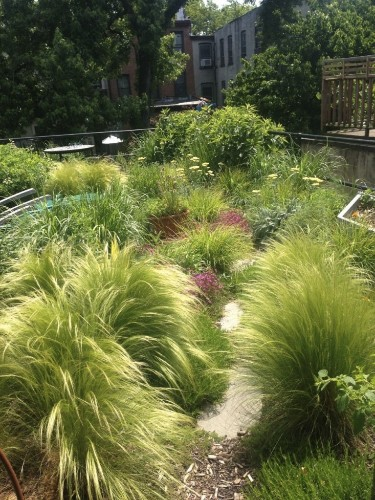 Brooklyn Oasis: A City Roof Garden, Before and After