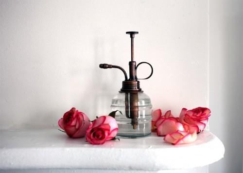 DIY: Rose Water Hydrosol