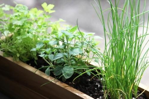 5 Quick Fixes: Grow Herbs on a Windowsill