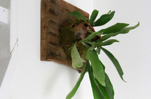 The Fern and I: How to Hang a DIY Staghorn Fern