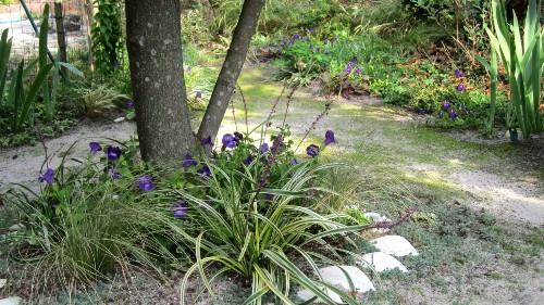Gardening 101: Lilyturf