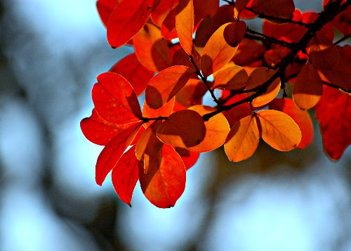 11 Best Trees to Plant for New England-Style Foliage