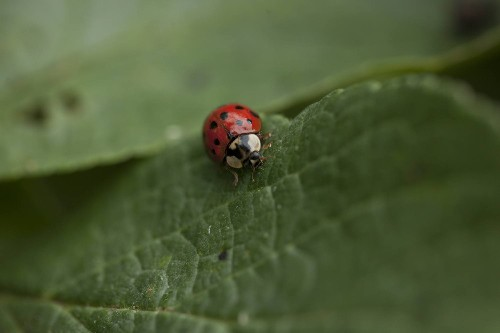 Your Garden's Best Friend: The Life and Times of a Ladybug