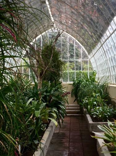 Gardening 101: Bromeliads