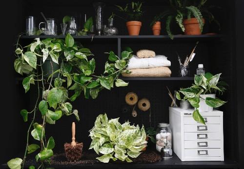 Gardening 101: Pothos