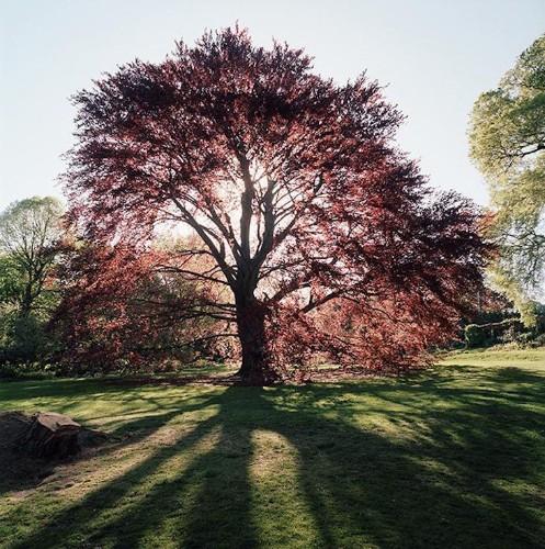 Specimen Trees: Are They Worth It?