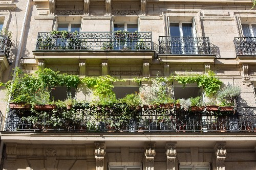 Perfect Parisian Balcony Gardens: 7 Favorites from the Gardenista Archives