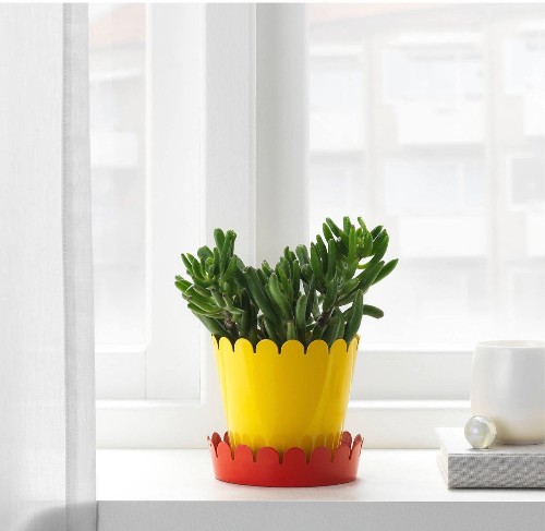 A New Ikea Plant Saucer That Will Change Your Life (for 99 Cents)