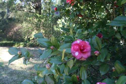 A Writer's Garden: Eudora Welty in Mississippi