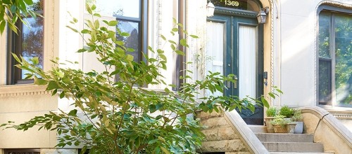 My Brooklyn Story: Creating a Townhouse Garden from Scratch in Crown Heights