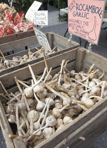 Gardening 101: Garlic