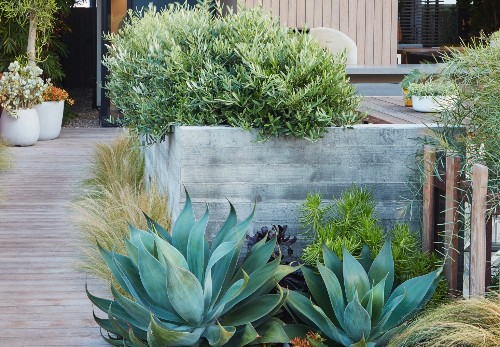 Low-Water Landscapes: 8 Ideas for Dry Gardens, from Designer Daniel Nolan