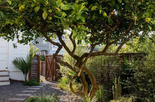 Your First Garden: What You Need to Know Before You Prune Shrubs and Trees