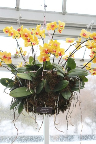 Gardening 101: How to Care for an Orchid