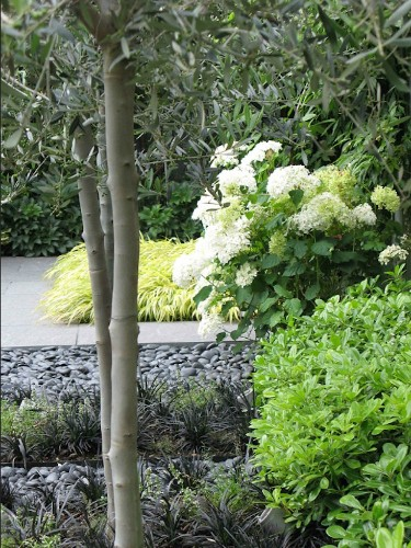 Before & After: A Jet Black Garden with White Jasmine Perfume