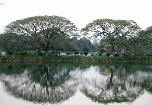 10 Ideas to Steal from Botanical Gardens Around the World
