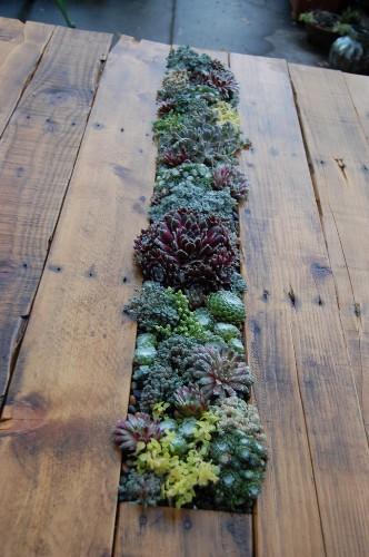 DIY: Succulents Table
