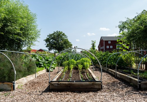 10 Edible Garden Ideas to Steal from Michigan's Favorite Foodie Farmers