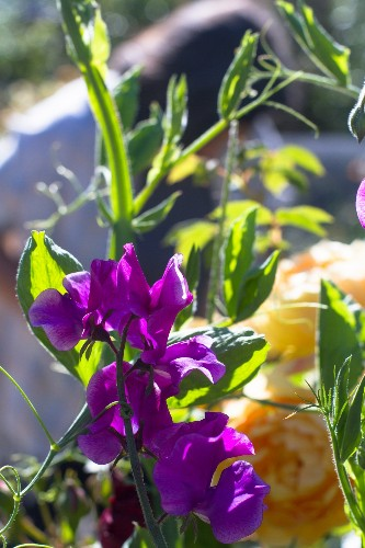 Garden Visit: My Driveway Oasis in Half Moon Bay, California