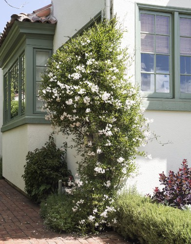 9 Ways to Create Curb Appeal with Flowering Vines and Climbers