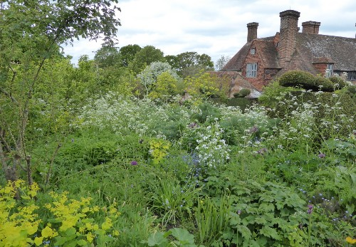 Cow Parsley: An English Weed with Royal Connections
