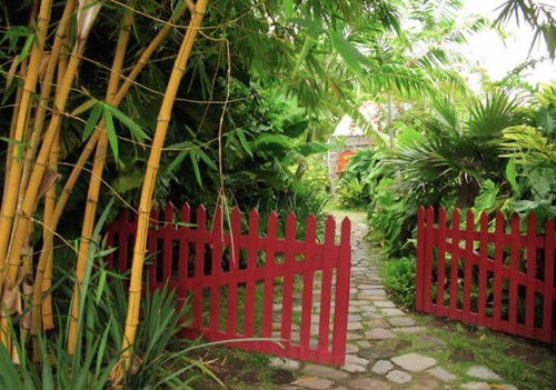 The Accidental Gardeners: Artists Helen and Brice Marden in the Caribbean